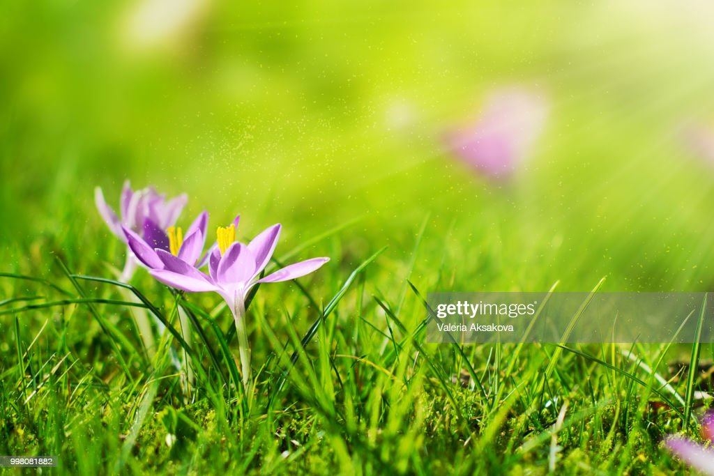 Beautiful Spring Flower Background With Sun Light Horizontal S Stock