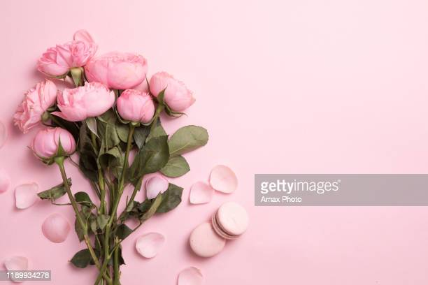 beautiful spring flowers on pink background, flower frame composition - rose colored stock pictures, royalty-free photos & images