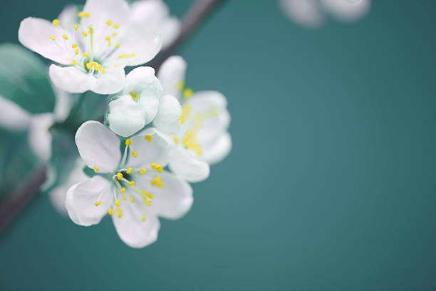 Free natural flower images pictures and royalty free stock beautiful spring flowers voltagebd Images
