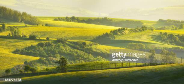 a beautiful spring landscape of the hills of south moravia in the morning light. rural landscape of nature with trees and fence on green hills, czech republic. amazing morning light. - チェコ共和国 ストックフォトと画像