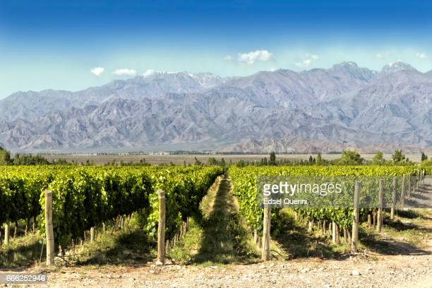 beautiful springtime at vineyards - argentina stock pictures, royalty-free photos & images