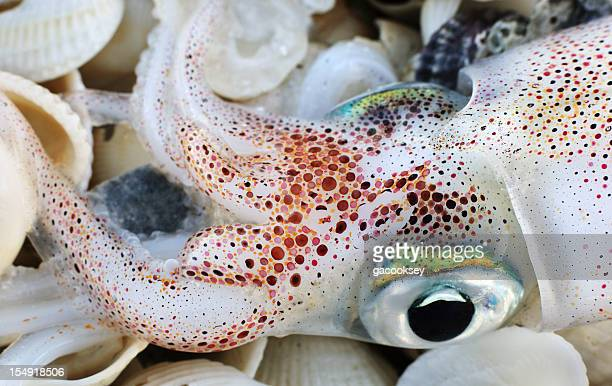 Wunderschöne Tintenfisch mit Muscheln