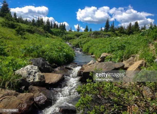 bellissimo ruscello che scorre nelle montagne rocciose canadesi - ruscello foto e immagini stock