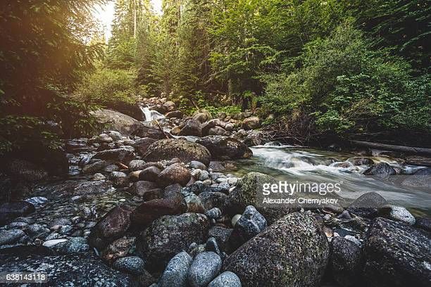beautiful stream in mountains - spring flowing water stock pictures, royalty-free photos & images