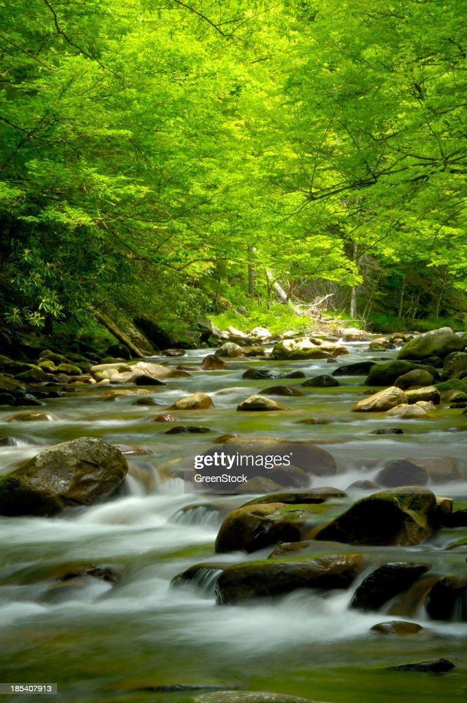 Beautiful Stream in the Great Smoky Mountains at Tremont : Stock Photo