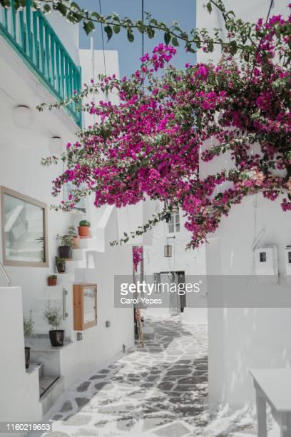 beautiful  street and  bouganvillae in naoussa,greece - culture méditerranéenne photos et images de collection