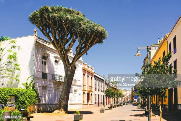 """beautiful street with canarian architecture and """"drago"""" tree in san cristóbal de la laguna town, in tenerife island (canary islands, spain) - tenerife stock pictures, royalty-free photos & images"""