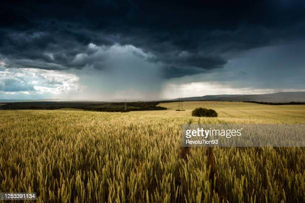 beautiful structured thunder storm in bulgarian plains - torrential rain stock pictures, royalty-free photos & images