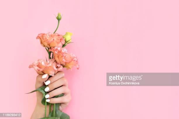 beautiful stylish female manicure. flower, pink background. - handcrème stockfoto's en -beelden