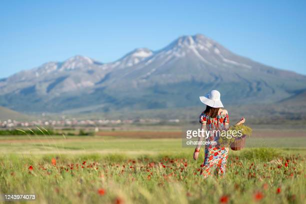beautiful stylish girl in dress walking on the poppy meadow picking flowers from the wicker basket. beautiful woman in hat relaxing in the summer field. back view - yellow dress stock pictures, royalty-free photos & images