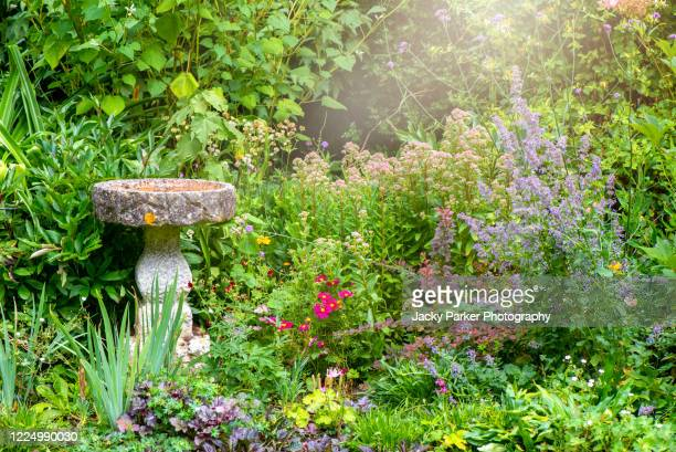 a beautiful summer, english cottage garden with a stone bird bath garden feature - garden stock pictures, royalty-free photos & images