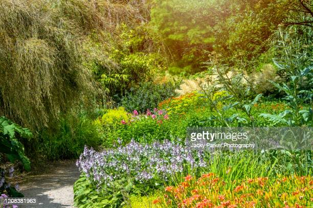 beautiful, summer, english herbaceous flower border in soft sunshine with hostas, day lilies and phlox - flower head stock pictures, royalty-free photos & images