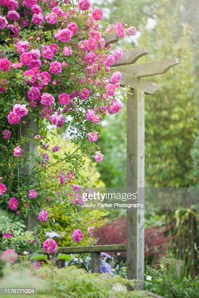 Rose Arbor Stock Pictures Royalty Free Photos Images Getty Images