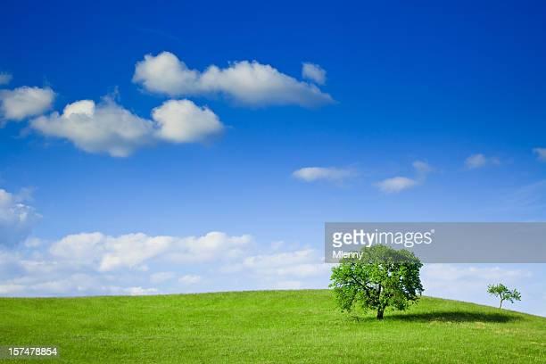 schönen sommer tree - mlenny stock-fotos und bilder