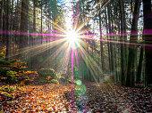 beautiful sunbeams autumn forest