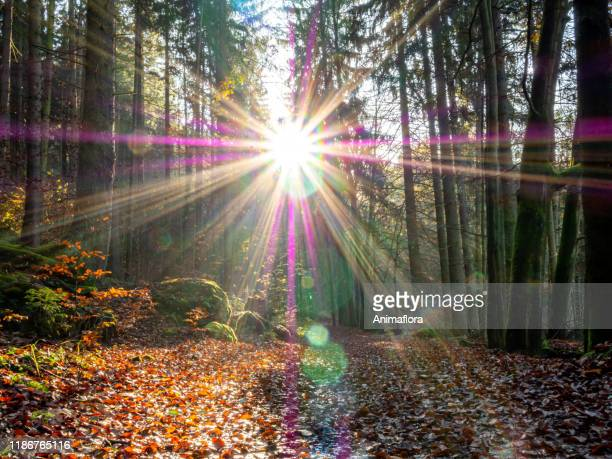beautiful sunbeams autumn forest