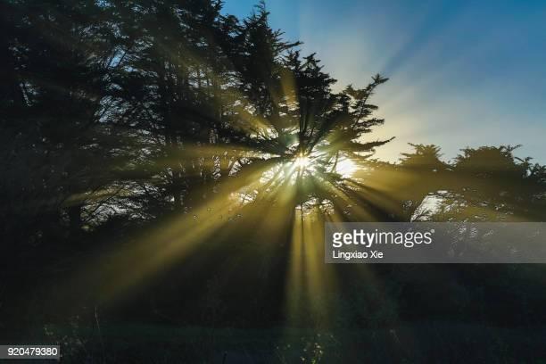 Beautiful Sunbeams through cypress trees at dusk in California