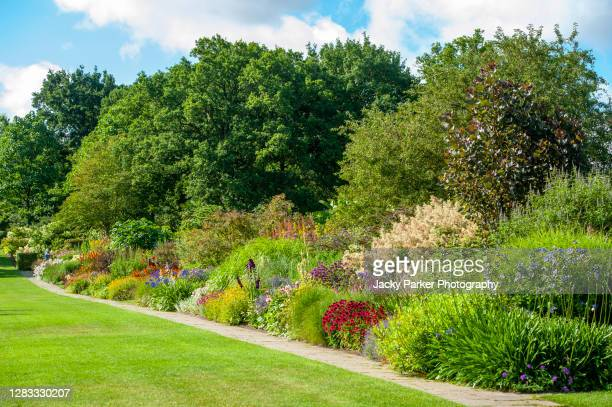 beautiful, sunny summer english herbaceous flower borders with heleniums, coneflowers, red hot pokers and grasses - muted backgrounds stock pictures, royalty-free photos & images