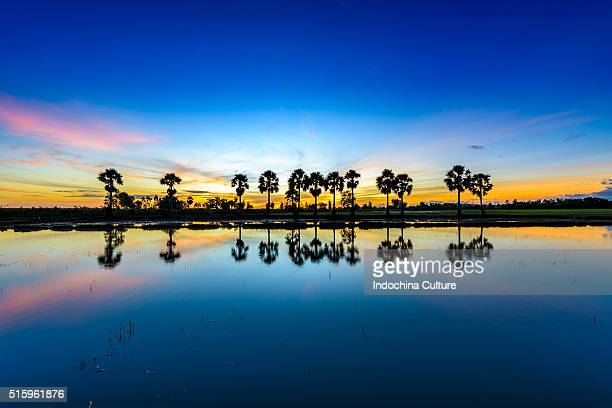 Beautiful sunrise against coconut palm trees and the rice field