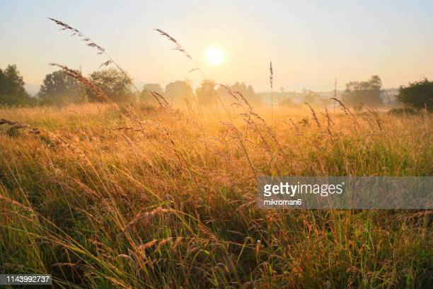 beautiful sunrise on foggy day - idyllic stock pictures, royalty-free photos & images