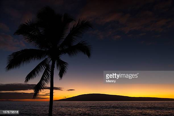 wunderschönen sonnenuntergang hawaiian palm tree - pazifik stock-fotos und bilder