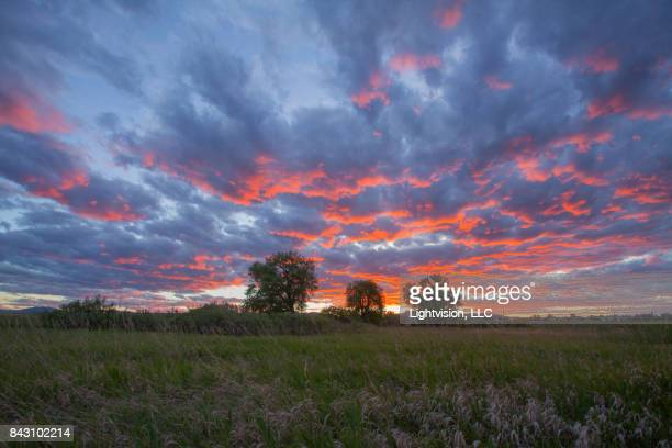 beautiful sunset in fort collins, colorado - fort collins stock pictures, royalty-free photos & images