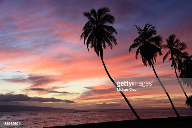 CONTENT] A beautiful sunset in Lahaina Maui Hawaii with silhouetted palm trees in the foreground
