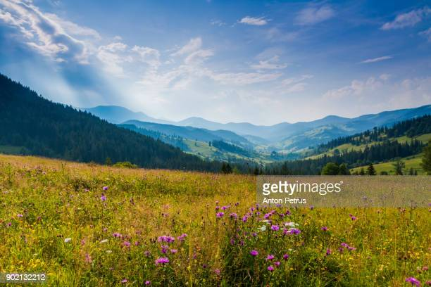 beautiful sunset in the mountains in summer - anton petrus stock pictures, royalty-free photos & images