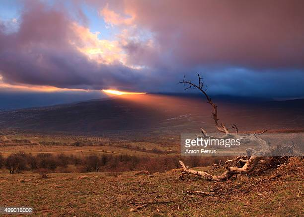 beautiful sunset in the mountains with a dead tree - anton petrus stock pictures, royalty-free photos & images
