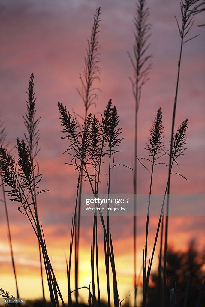 Beautiful sunset light : Stockfoto