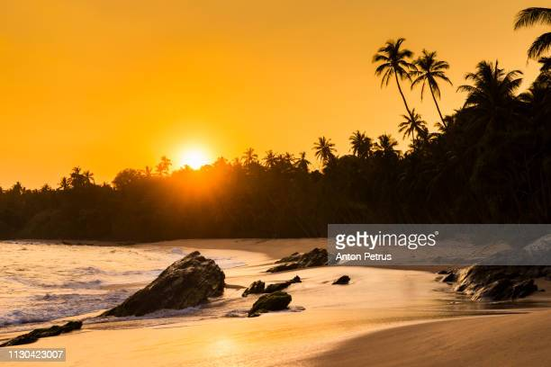 Beautiful sunset on a sandy beach with palm trees, Sri Lanka