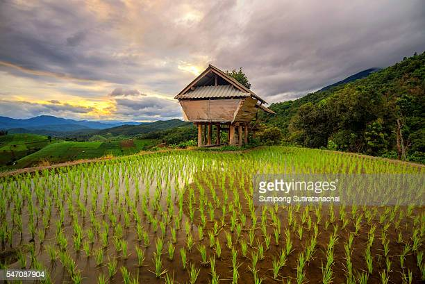 Beautiful sunset scenic view with cottage at rice terrace and mountain in chiangmai , Thailand