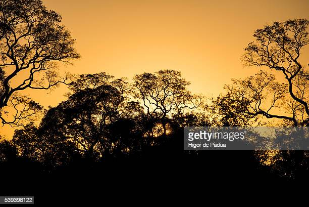 a beautiful sunset seen through the trees in the pantanal - animal selvagem stock pictures, royalty-free photos & images