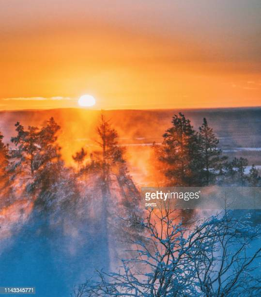 beautiful sunset view on foggy and snowy forest in lapland, finland - winter stock pictures, royalty-free photos & images