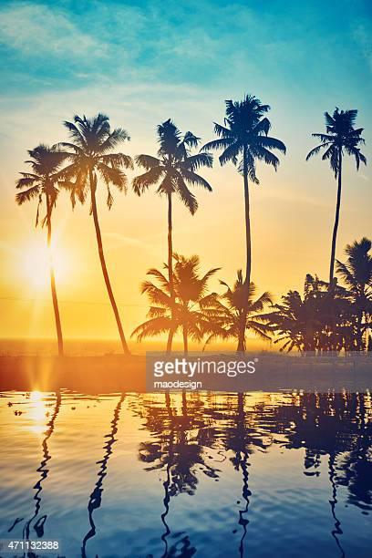 Belo pôr do sol com árvores de palma em backwaters de Kerala