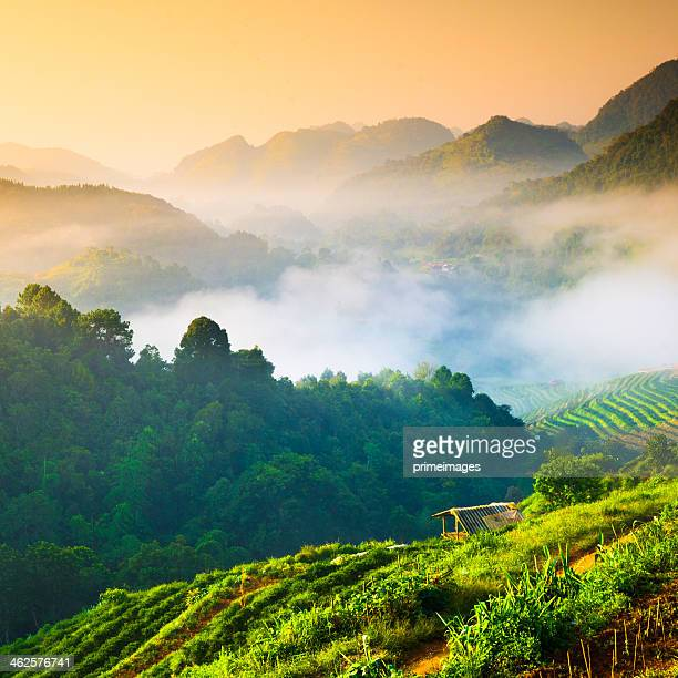 beautiful sunshine at misty morning mountains . - weather stock pictures, royalty-free photos & images