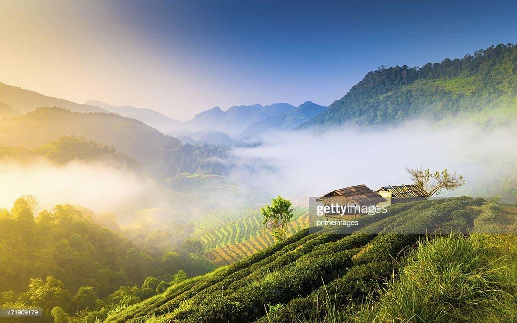 Hermoso sol a misty mañana a las montañas. : Foto de stock