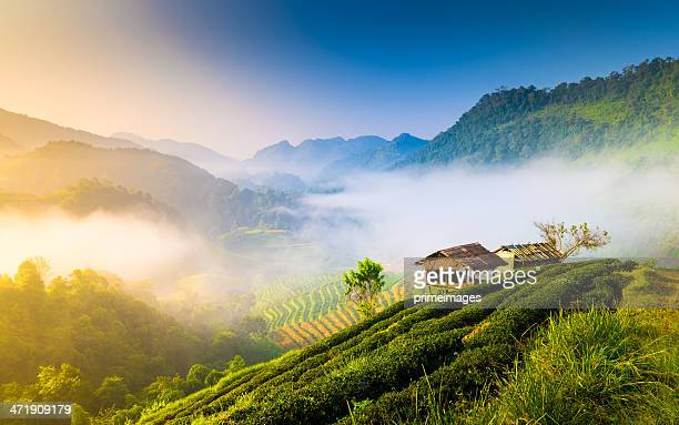 beautiful sunshine at misty morning mountains . - north stock pictures, royalty-free photos & images