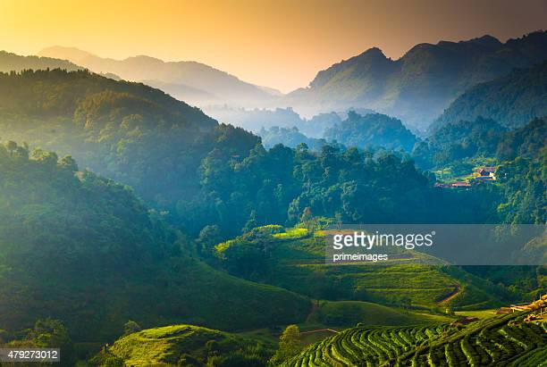 beautiful sunshine at misty morning mountains . - chiang mai province stock photos and pictures
