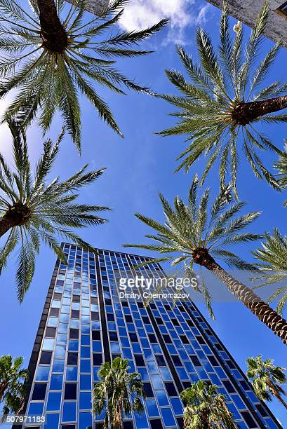 Beautiful tall palm trees on Lincoln Road in Miami Beach.