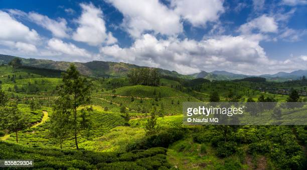 Beautiful tea gardens in Munnar, Kerala, India