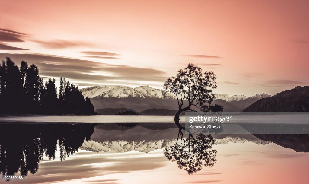 Beautiful tree of lake Wanaka : Stock Photo