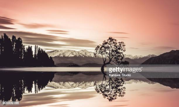 beautiful tree of lake wanaka - mirror lake stock pictures, royalty-free photos & images