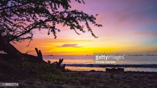 beautiful tree silhouette and twilight at tamarindo beach in costa rica - playa tamarindo fotografías e imágenes de stock