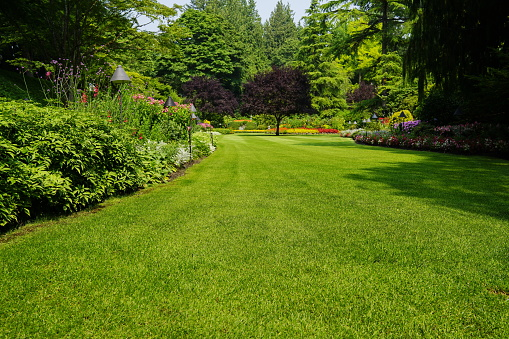 Beautiful trees and green grass  in  garden 899234322