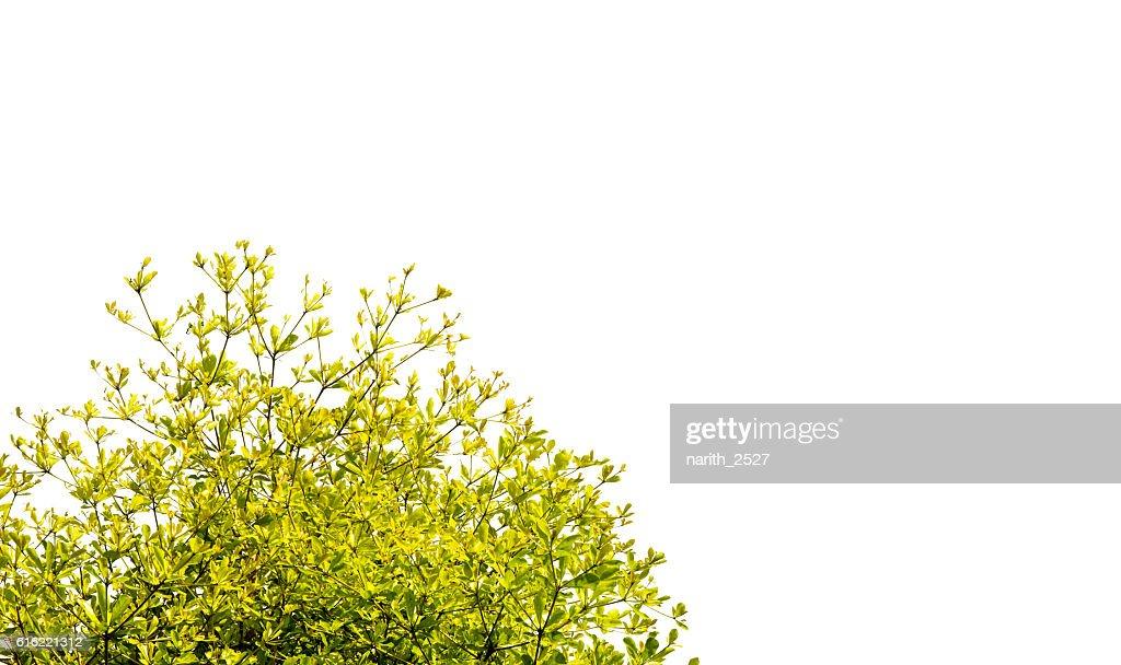 Magnifiques arbres sur fond blanc : Photo