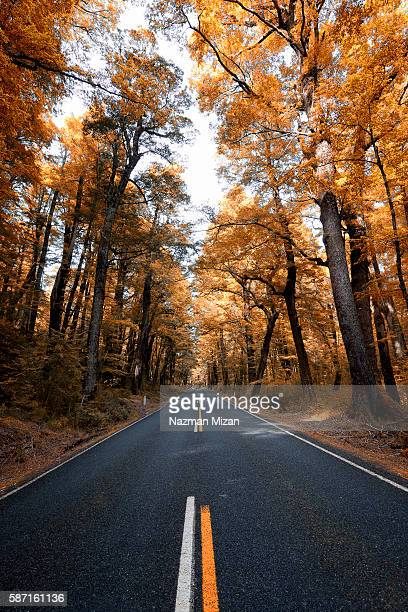 Beautiful trees with autumn colors along the road to Milford Sound.