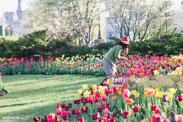 beautiful tulips in bloom in park - ottawa stock pictures, royalty-free photos & images