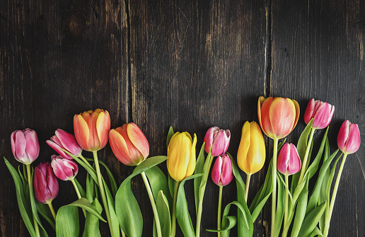 Beautiful tulips on wood 930617656