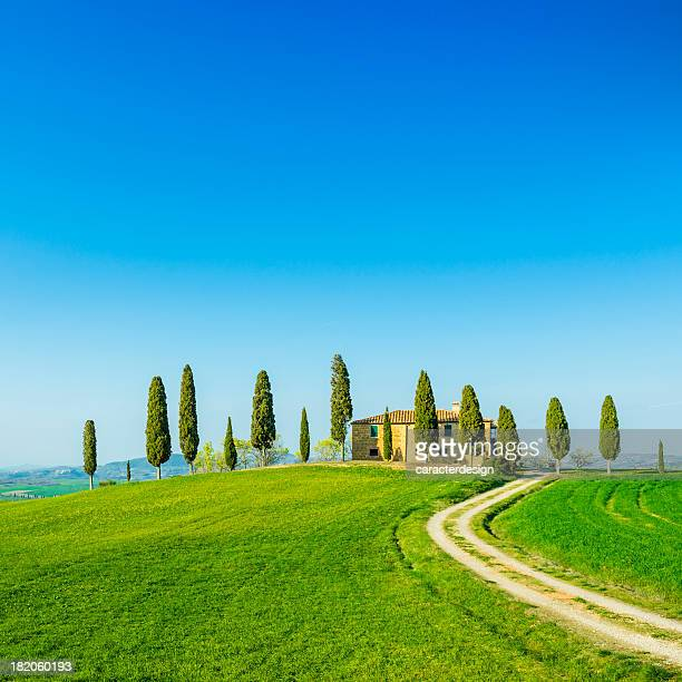 beautiful tuscany fields - cypress tree stock pictures, royalty-free photos & images
